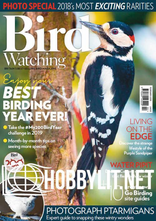 Bird Watching - February 2019