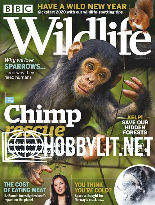 Wildlife - January 2020