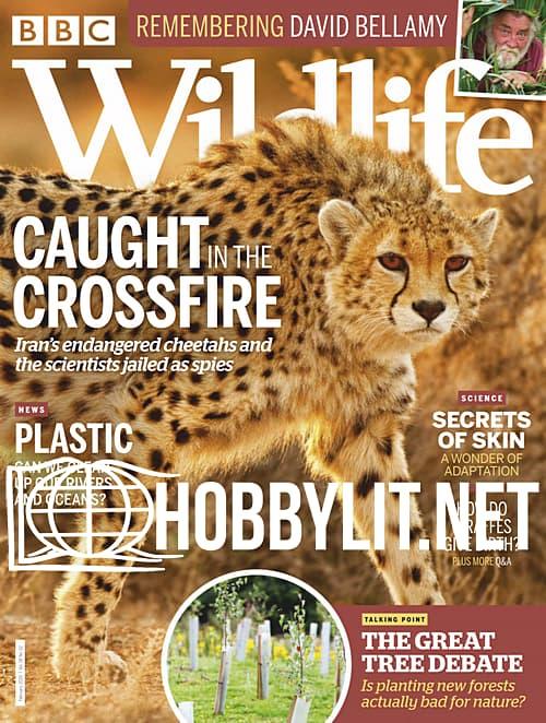 Wildlife - February 2020
